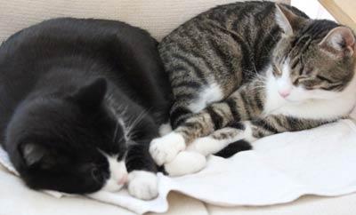 Findus und Felix
